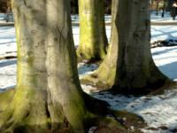 drzewa2.jpg