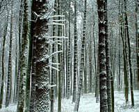 drzewa_zima