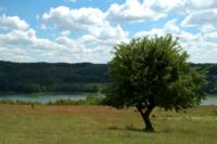 drzewo_06