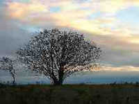 drzewo_czaple.jpg