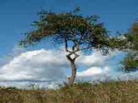 drzewo_kack.jpg