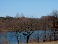 drzewonad_jeziorem.jpg