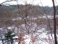 drzeworozgalezione.jpg