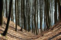 Kaszuby,  drzewa, lasy na Kaszubach