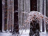 pnie_zima1