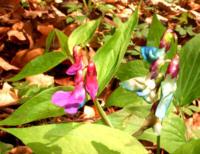 kwiaty_les