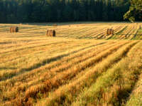 Polany, pola, łąki -  fotoreportaże, fotogalerie