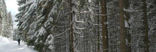 Oznaczenia nart
