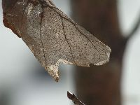 Zimowe liście