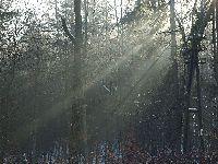 Zimowe promienie słońca