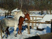 Zima - Konie