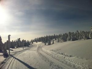 Góry Orlickie - szlak po czeskiej stronie z Serlicha