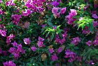kwiaty_42147.jpg