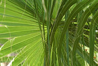 zielony_95147.jpg