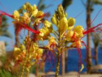 kwiaty_zółte