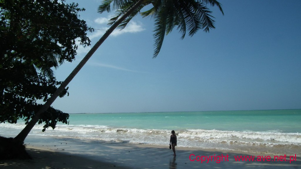 Plaża pod palmą