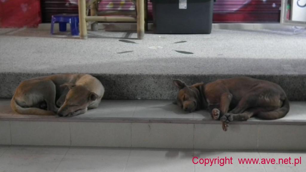 Znużone słońcem psy już śpią