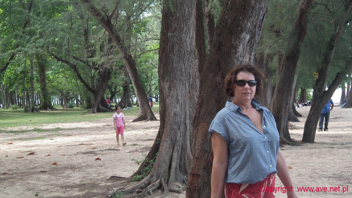 Pod egzotycznymi sosnami kazuarynowymi