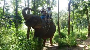 Naszego dzielnego słonia dokarmiamy bananami