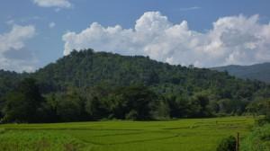Pola ryżowe w górskiej dolinie
