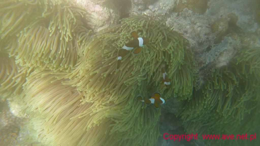 Rodzinka Nemo